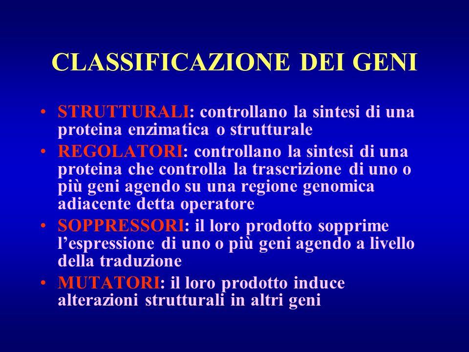CLASSIFICAZIONE DEI GENI STRUTTURALI: controllano la sintesi di una proteina enzimatica o strutturale REGOLATORI: controllano la sintesi di una protei