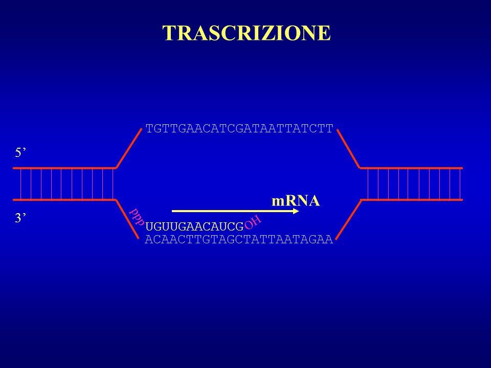 UTILIZZO DEI CODON E REGOLAZIONE DELLESPRESSIONE GENICA PROMOTORE GENE 1 GENE2 TERMINATORE mRNA STESSO NUMERO DI COPIE PROTEINA 1 CAI 0,6 tRNA sufficienti CAI 0,1 tRNA limitati PROTEINA 2