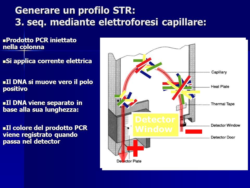 Prodotto PCR iniettato nella colonna Prodotto PCR iniettato nella colonna Si applica corrente elettrica Si applica corrente elettrica Il DNA viene sep