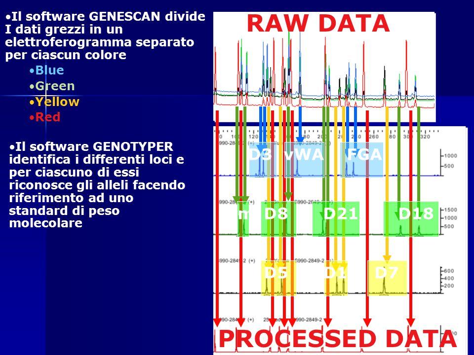 D3vWAFGA D8D21D18 D5D13D7 Am RAW DATA PROCESSED DATA Il software GENESCAN divide I dati grezzi in un elettroferogramma separato per ciascun colore Blu