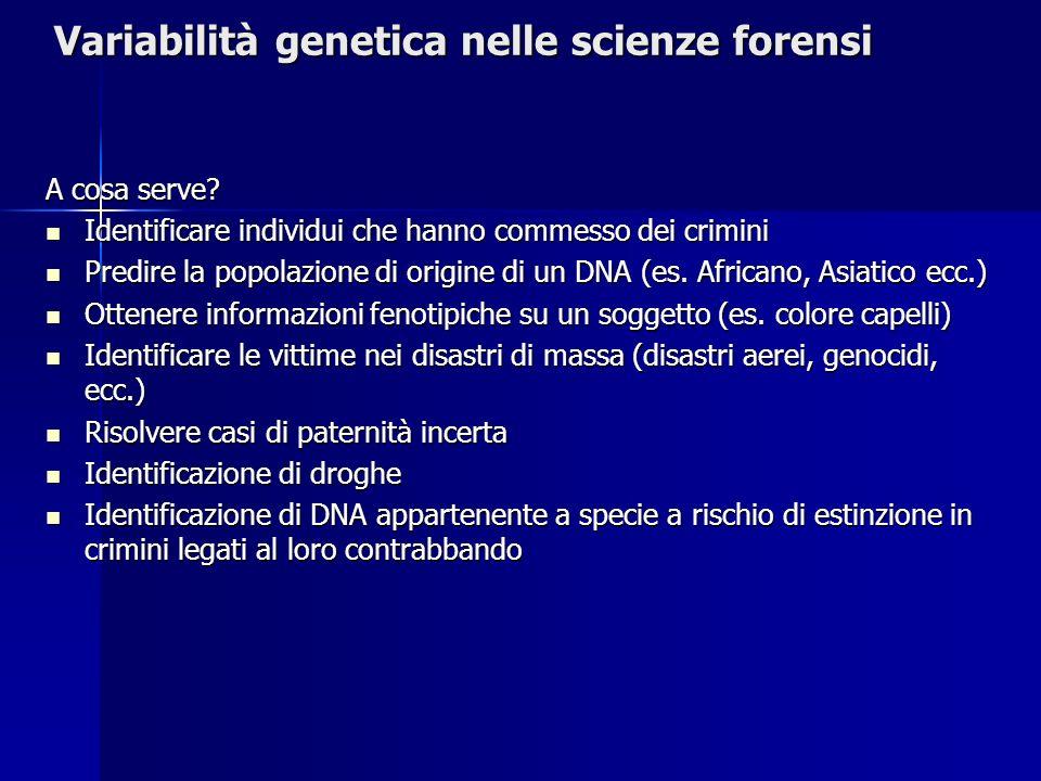 Variabilità genetica nelle scienze forensi A cosa serve? Identificare individui che hanno commesso dei crimini Identificare individui che hanno commes