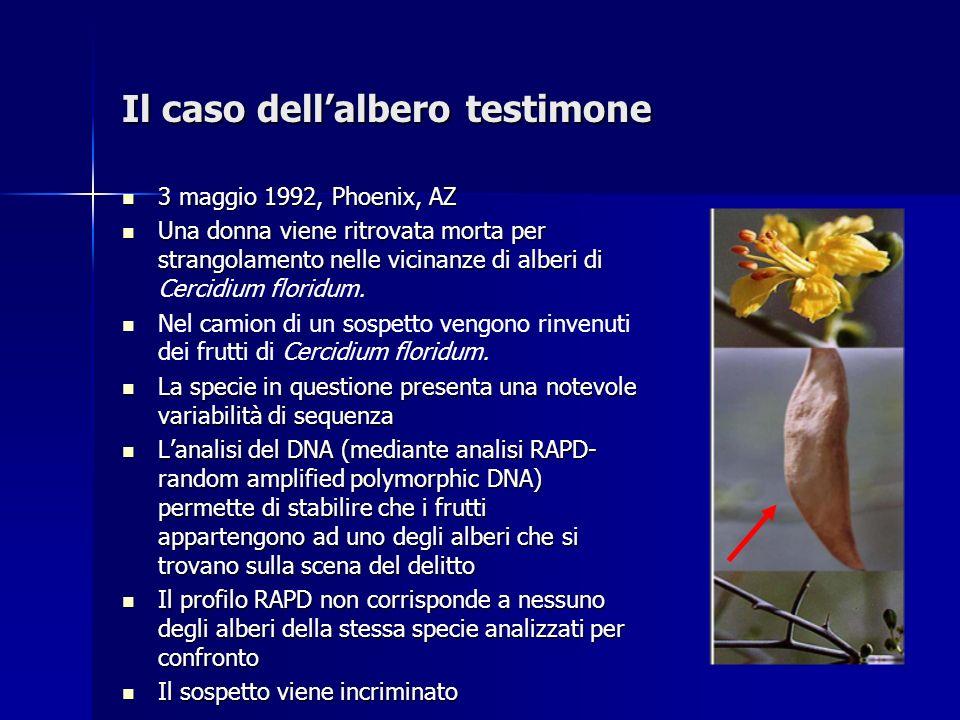 Il caso dellalbero testimone 3 maggio 1992, Phoenix, AZ 3 maggio 1992, Phoenix, AZ Una donna viene ritrovata morta per strangolamento nelle vicinanze