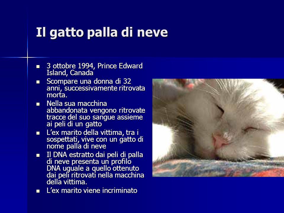 Il gatto palla di neve 3 ottobre 1994, Prince Edward Island, Canada 3 ottobre 1994, Prince Edward Island, Canada Scompare una donna di 32 anni, succes