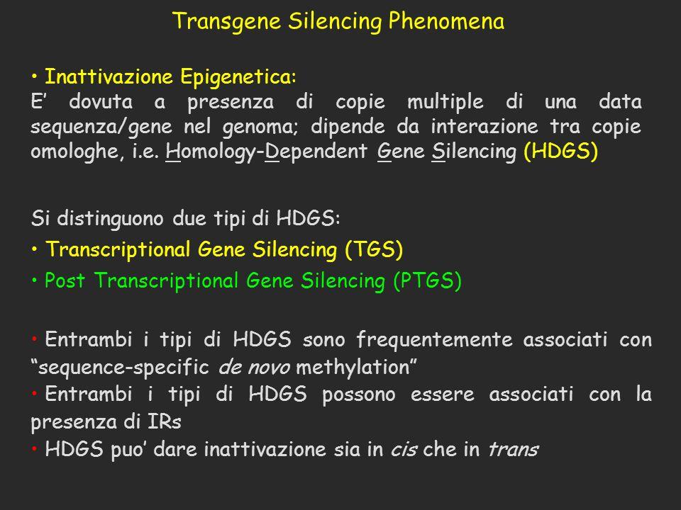 Si distinguono due tipi di HDGS: Transcriptional Gene Silencing (TGS) Post Transcriptional Gene Silencing (PTGS) Entrambi i tipi di HDGS sono frequent