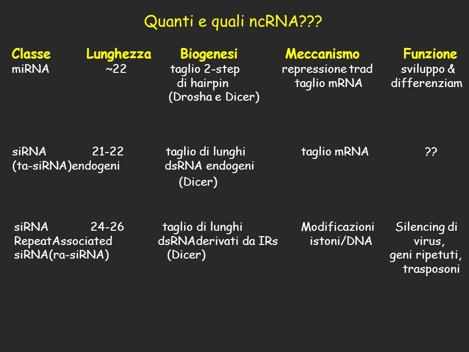 Classe Lunghezza Biogenesi Meccanismo Funzione miRNA~22 taglio 2-step repressione trad sviluppo & di hairpin taglio mRNA differenziam (Drosha e Dicer)