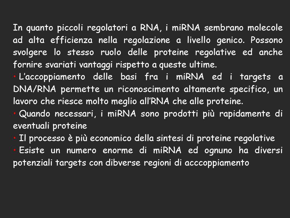 In quanto piccoli regolatori a RNA, i miRNA sembrano molecole ad alta efficienza nella regolazione a livello genico. Possono svolgere lo stesso ruolo