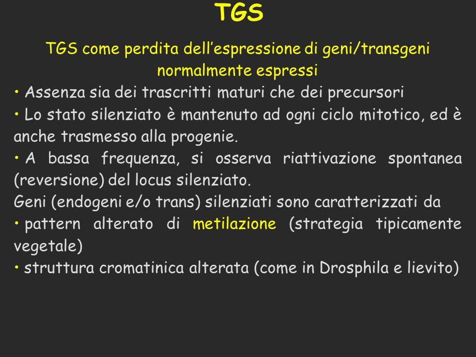 TGS TGS come perdita dellespressione di geni/transgeni normalmente espressi Assenza sia dei trascritti maturi che dei precursori Lo stato silenziato è