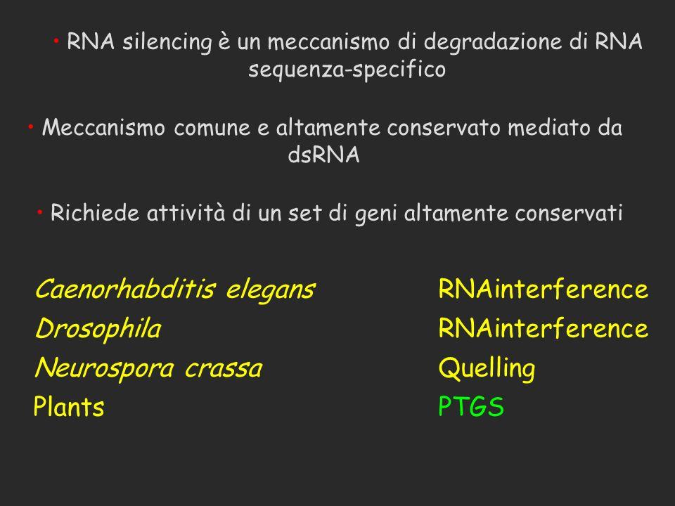 Caenorhabditis elegansRNAinterference DrosophilaRNAinterference Neurospora crassaQuelling PlantsPTGS Meccanismo comune e altamente conservato mediato