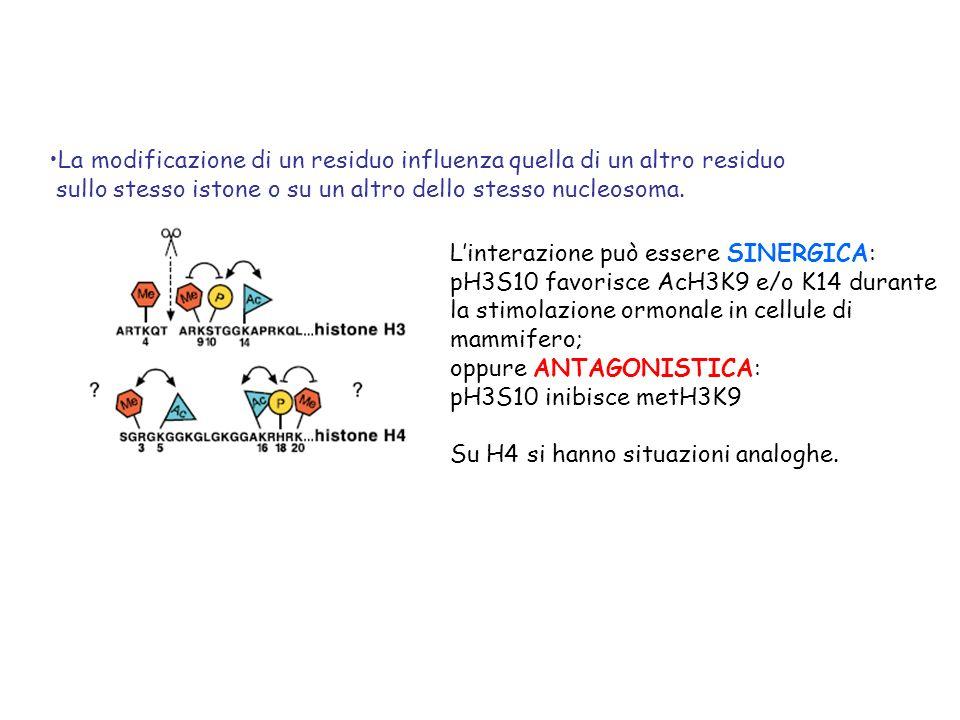 La modificazione di un residuo influenza quella di un altro residuo sullo stesso istone o su un altro dello stesso nucleosoma. Linterazione può essere