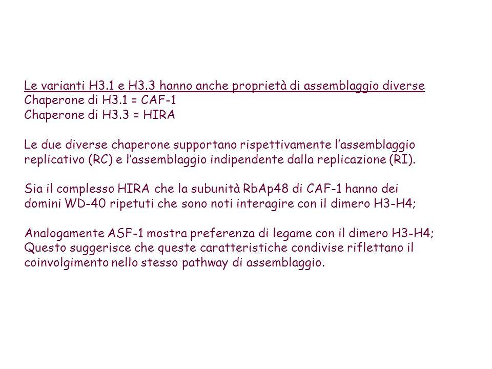 Studi recenti hanno evidenziato un ruolo per le varianti di H3 nella determinazione del destino cellulare durante lembriogenesi.