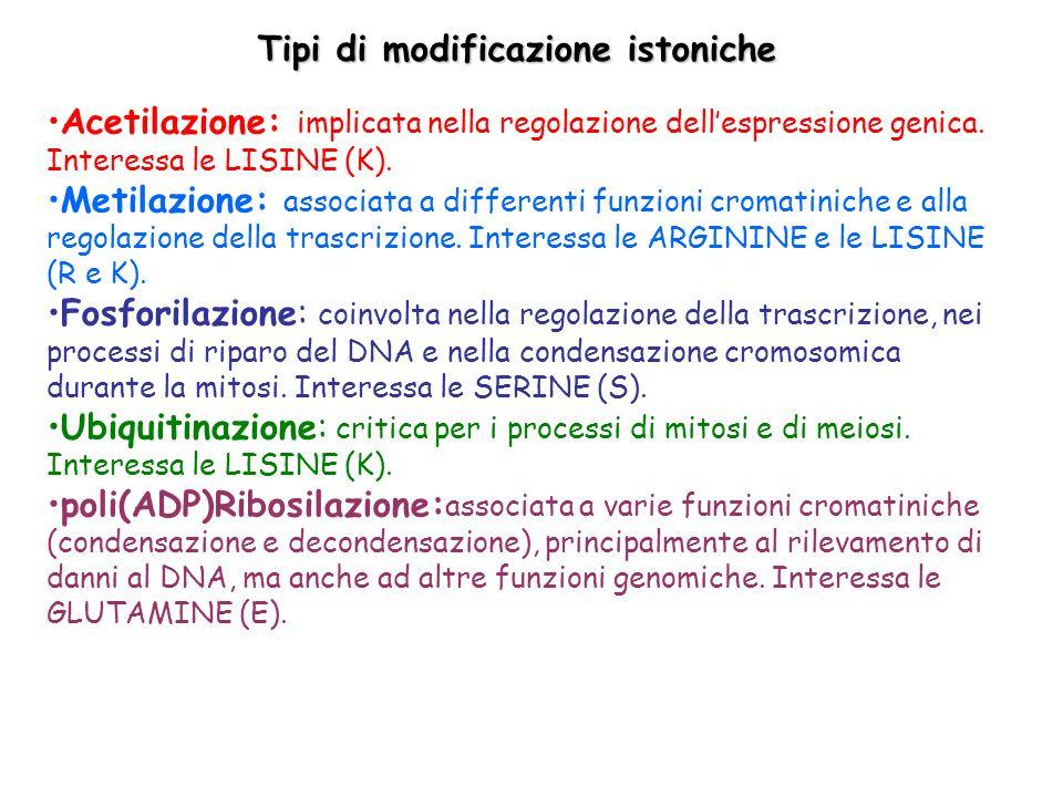 Conseguenze funzionali delle modificazioni istoniche Le modificazioni non influenzano la stabilità del core nucleosomale, ma alterano solamente la carica elettrostatica delle code N-terminali.