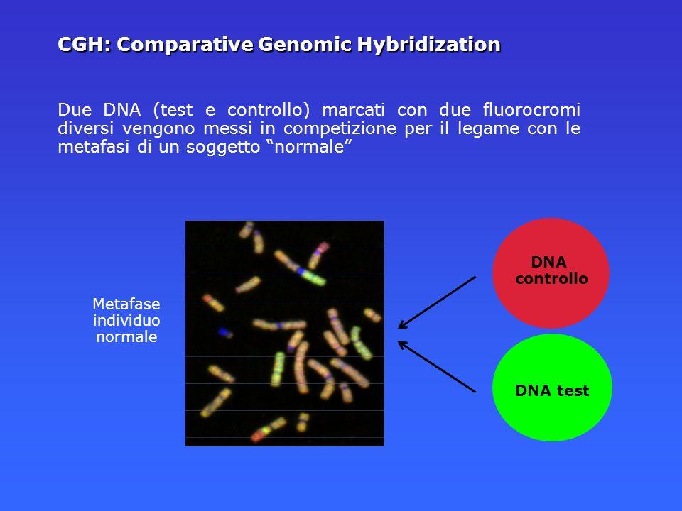 Due DNA (test e controllo) marcati con due fluorocromi diversi vengono messi in competizione per il legame con le metafasi di un soggetto normale Meta