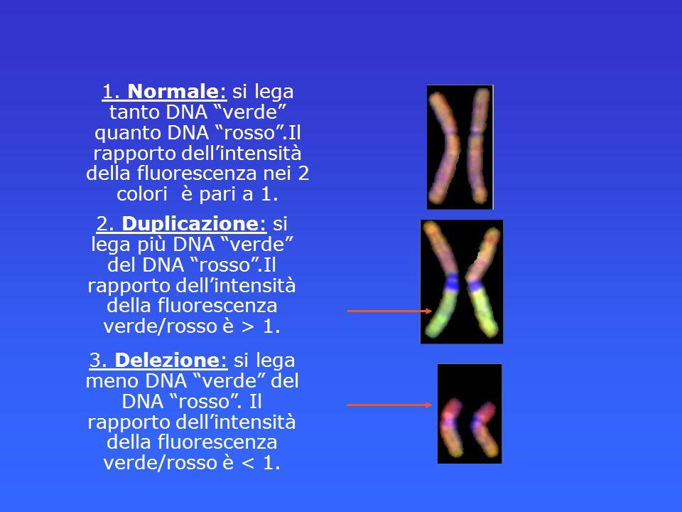 1. Normale: si lega tanto DNA verde quanto DNA rosso.Il rapporto dellintensità della fluorescenza nei 2 colori è pari a 1. 2. Duplicazione: si lega pi