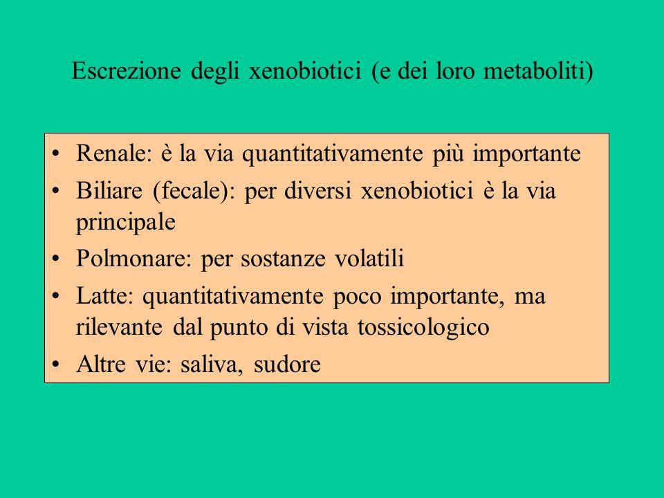 Escrezione degli xenobiotici (e dei loro metaboliti) Renale: è la via quantitativamente più importante Biliare (fecale): per diversi xenobiotici è la