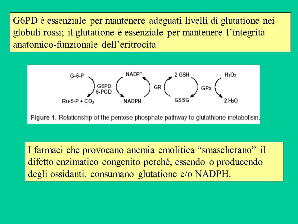 I farmaci che provocano anemia emolitica smascherano il difetto enzimatico congenito perché, essendo o producendo degli ossidanti, consumano glutation
