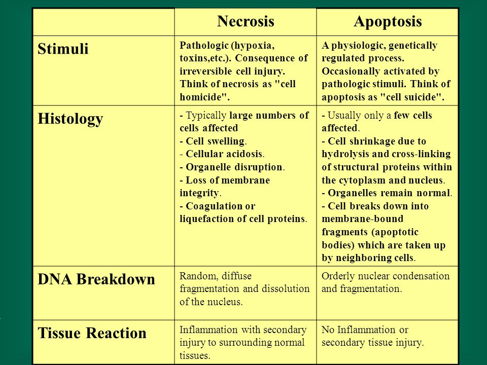 NecrosisApoptosis Stimuli Pathologic (hypoxia, toxins,etc.). Consequence of irreversible cell injury. Think of necrosis as