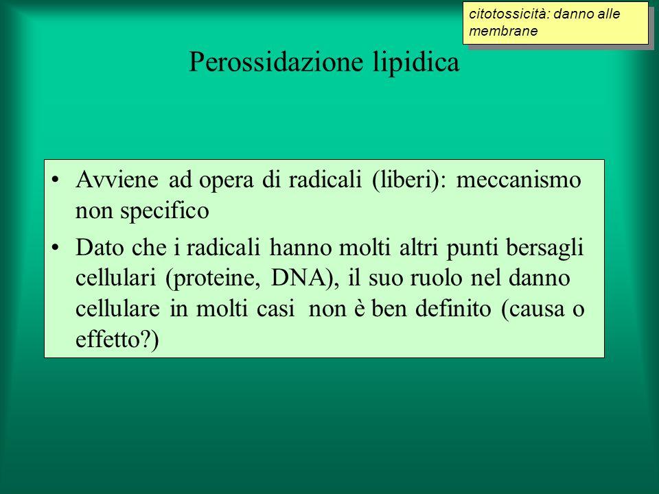 Perossidazione lipidica Avviene ad opera di radicali (liberi): meccanismo non specifico Dato che i radicali hanno molti altri punti bersagli cellulari