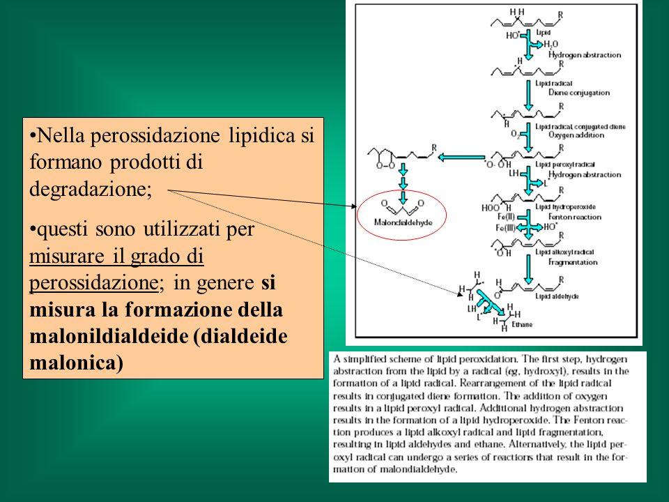 Nella perossidazione lipidica si formano prodotti di degradazione; questi sono utilizzati per misurare il grado di perossidazione; in genere si misura