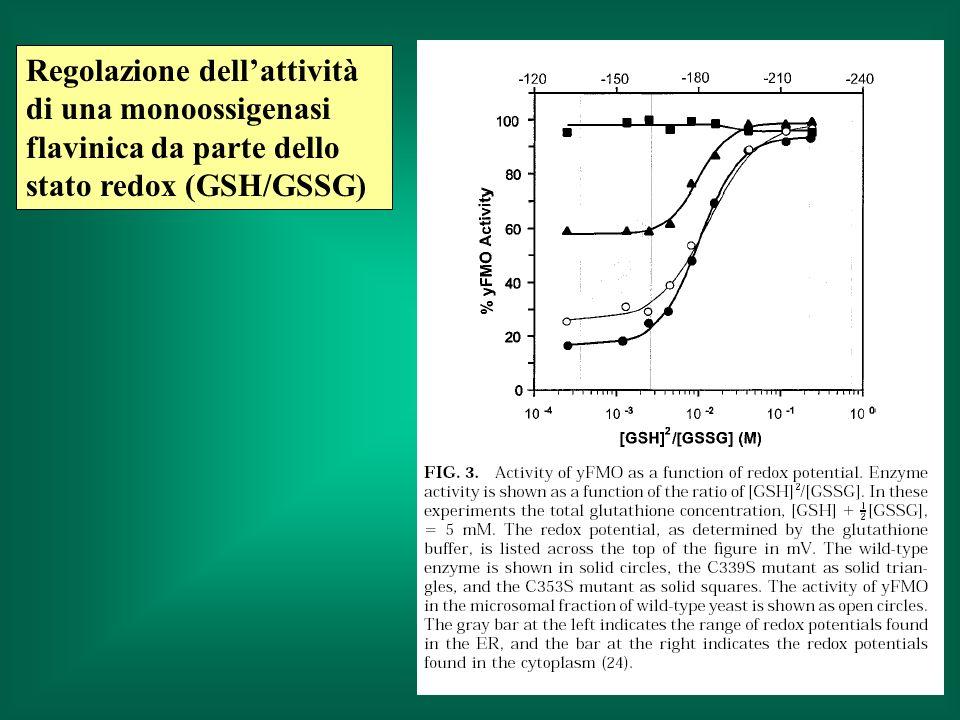 Regolazione dellattività di una monoossigenasi flavinica da parte dello stato redox (GSH/GSSG)