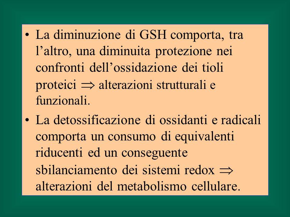 La diminuzione di GSH comporta, tra laltro, una diminuita protezione nei confronti dellossidazione dei tioli proteici alterazioni strutturali e funzio