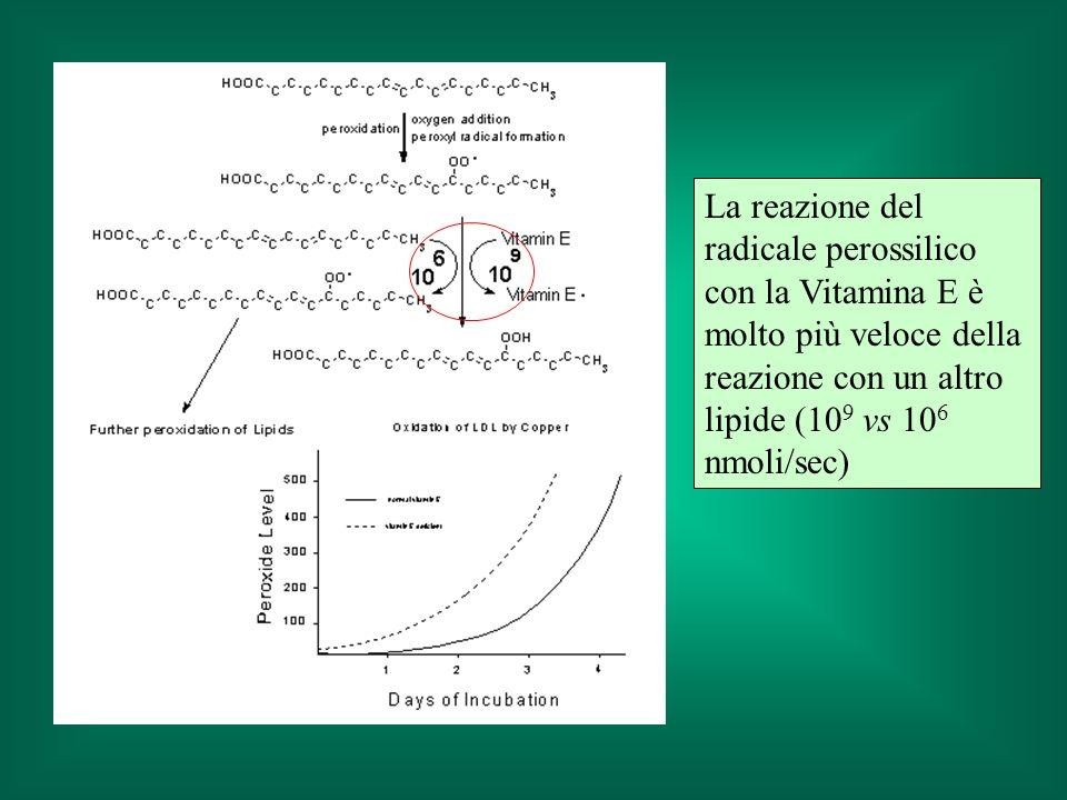 La reazione del radicale perossilico con la Vitamina E è molto più veloce della reazione con un altro lipide (10 9 vs 10 6 nmoli/sec)