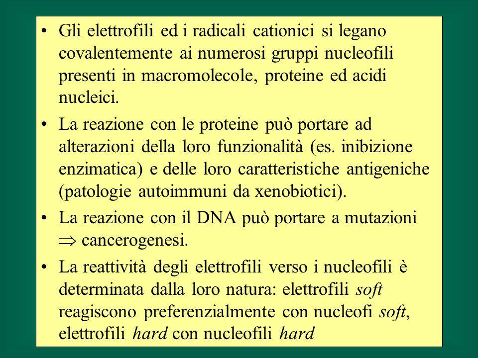 Gli elettrofili ed i radicali cationici si legano covalentemente ai numerosi gruppi nucleofili presenti in macromolecole, proteine ed acidi nucleici.