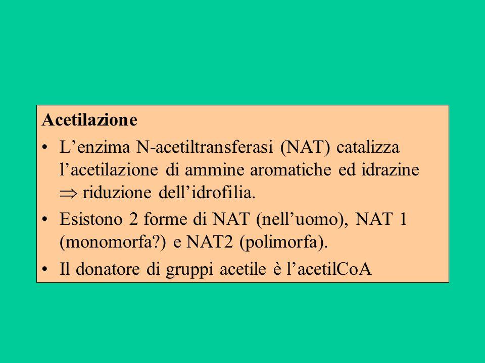 Acetilazione Lenzima N-acetiltransferasi (NAT) catalizza lacetilazione di ammine aromatiche ed idrazine riduzione dellidrofilia. Esistono 2 forme di N