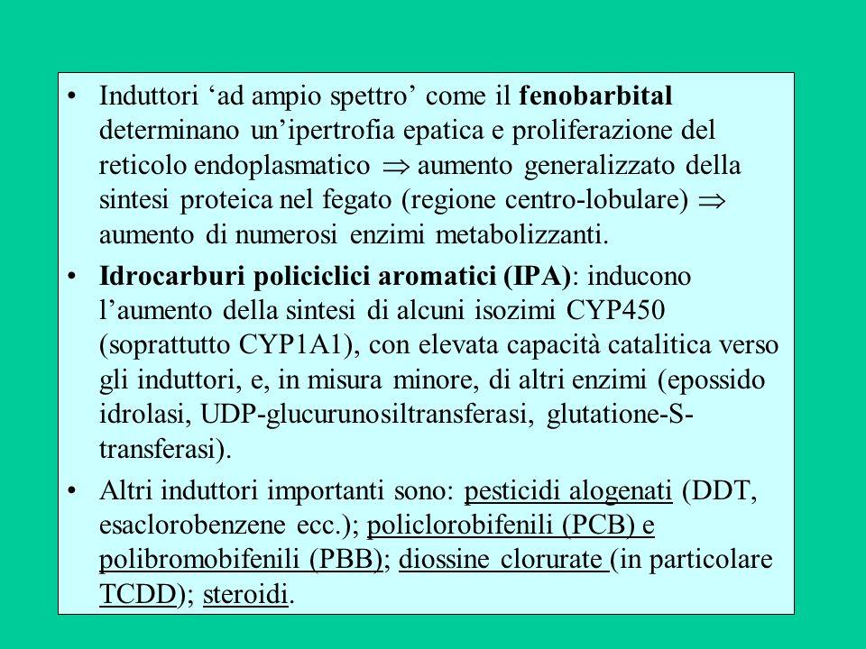 Induttori ad ampio spettro come il fenobarbital determinano unipertrofia epatica e proliferazione del reticolo endoplasmatico aumento generalizzato de