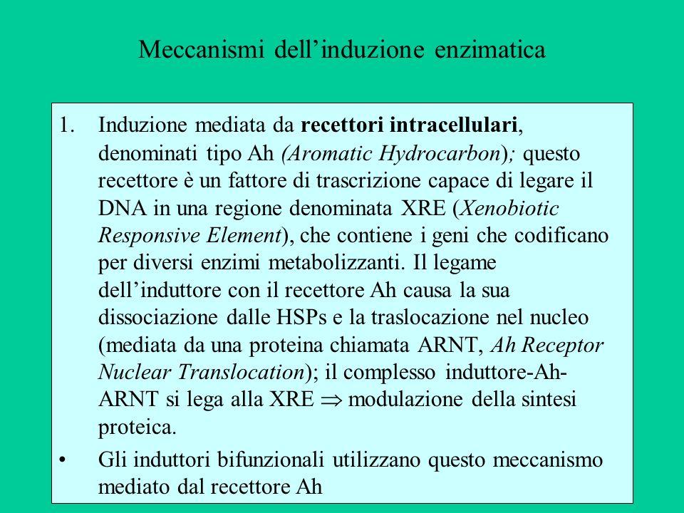 Meccanismi dellinduzione enzimatica 1.Induzione mediata da recettori intracellulari, denominati tipo Ah (Aromatic Hydrocarbon); questo recettore è un