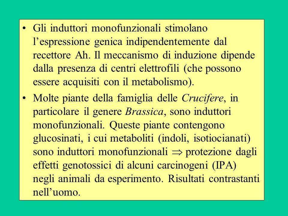 Gli induttori monofunzionali stimolano lespressione genica indipendentemente dal recettore Ah. Il meccanismo di induzione dipende dalla presenza di ce