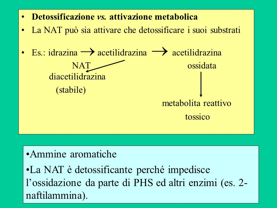 Detossificazione vs. attivazione metabolica La NAT può sia attivare che detossificare i suoi substrati Es.: idrazina acetilidrazina acetilidrazina NAT