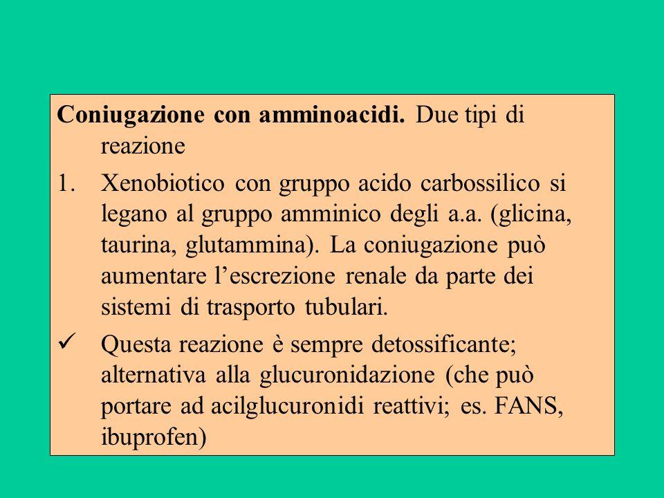 Coniugazione con amminoacidi. Due tipi di reazione 1.Xenobiotico con gruppo acido carbossilico si legano al gruppo amminico degli a.a. (glicina, tauri