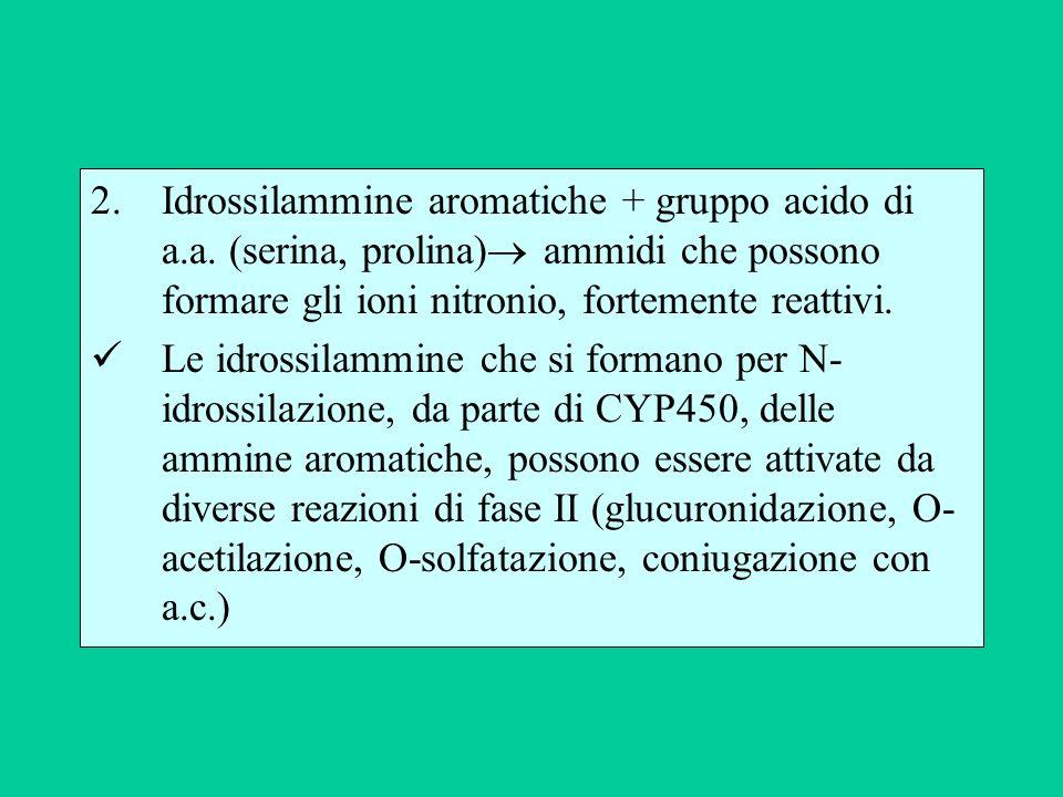 2.Idrossilammine aromatiche + gruppo acido di a.a. (serina, prolina) ammidi che possono formare gli ioni nitronio, fortemente reattivi. Le idrossilamm
