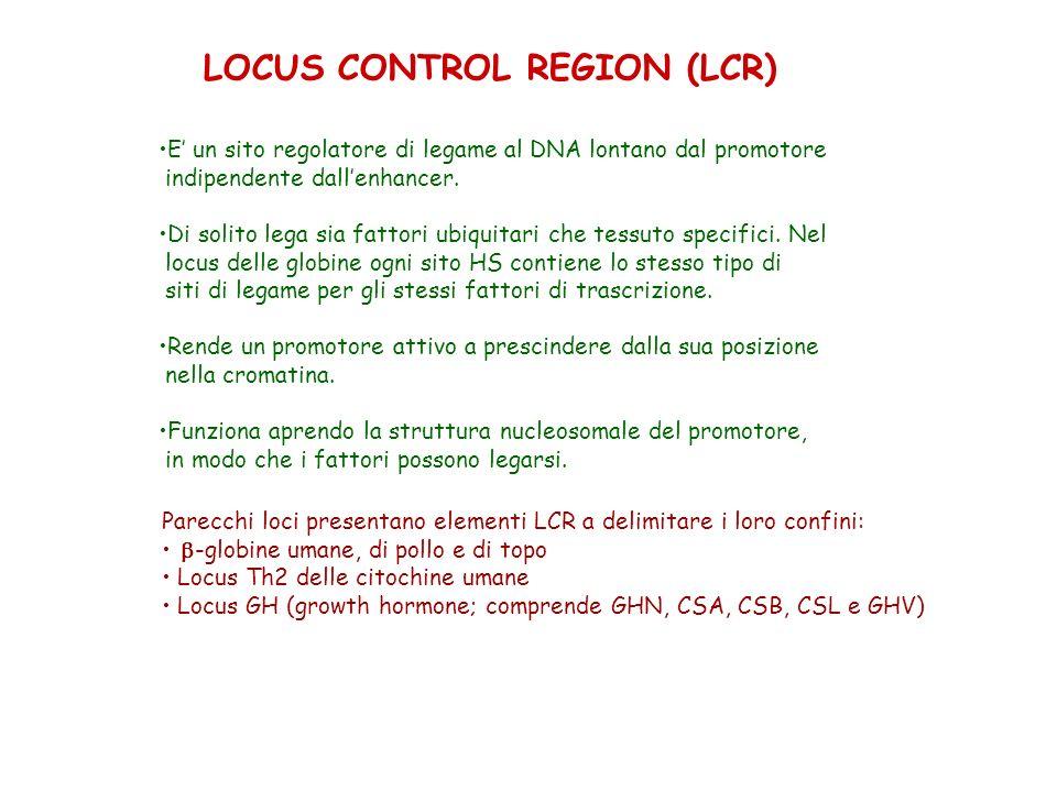 LOCUS CONTROL REGION (LCR) E un sito regolatore di legame al DNA lontano dal promotore indipendente dallenhancer. Di solito lega sia fattori ubiquitar