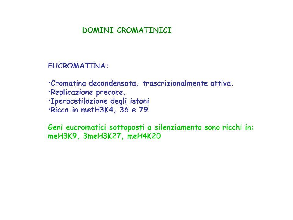 DOMINI CROMATINICI EUCROMATINA: Cromatina decondensata, trascrizionalmente attiva. Replicazione precoce. Iperacetilazione degli istoni Ricca in metH3K