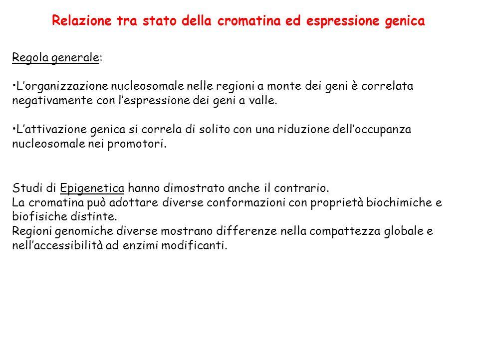 Relazione tra stato della cromatina ed espressione genica Regola generale: Lorganizzazione nucleosomale nelle regioni a monte dei geni è correlata negativamente con lespressione dei geni a valle.