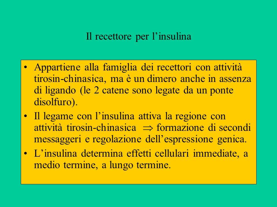 Il recettore per linsulina Appartiene alla famiglia dei recettori con attività tirosin-chinasica, ma è un dimero anche in assenza di ligando (le 2 catene sono legate da un ponte disolfuro).