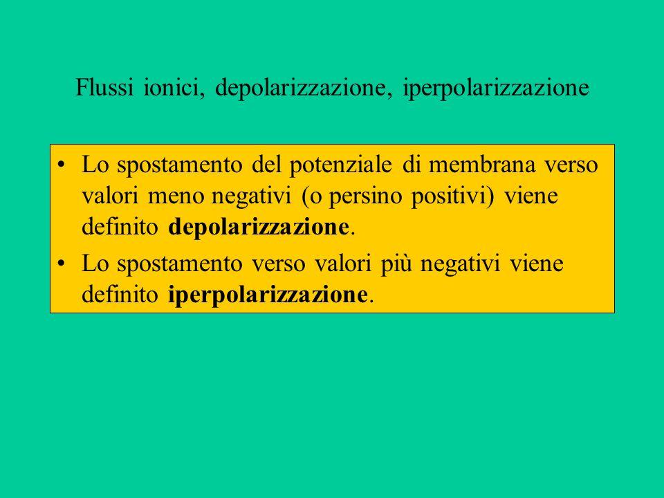 Flussi ionici, depolarizzazione, iperpolarizzazione Lo spostamento del potenziale di membrana verso valori meno negativi (o persino positivi) viene definito depolarizzazione.
