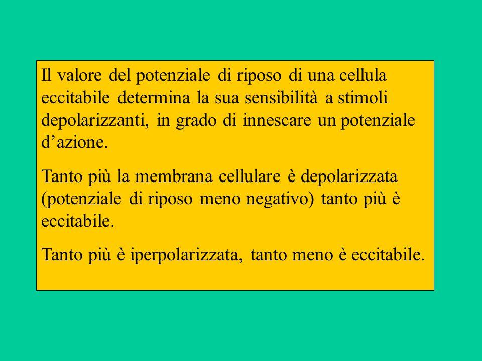 Il valore del potenziale di riposo di una cellula eccitabile determina la sua sensibilità a stimoli depolarizzanti, in grado di innescare un potenziale dazione.