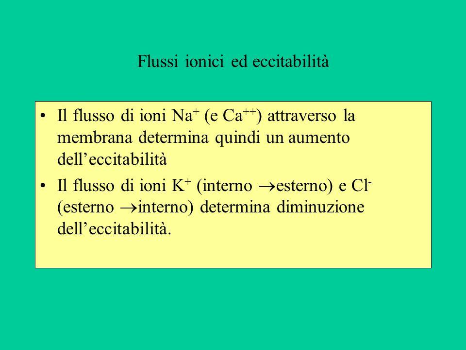 Flussi ionici ed eccitabilità Il flusso di ioni Na + (e Ca ++ ) attraverso la membrana determina quindi un aumento delleccitabilità Il flusso di ioni K + (interno esterno) e Cl - (esterno interno) determina diminuzione delleccitabilità.