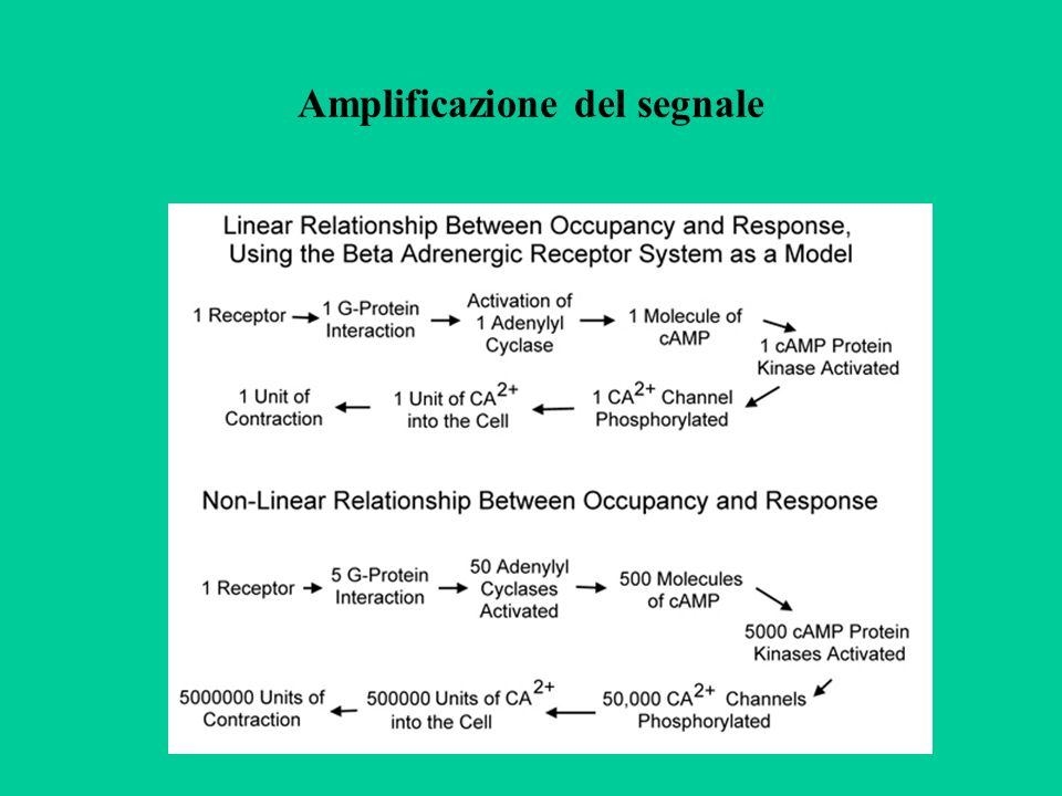 Potenziale di riposo Le membrane cellulari contengono canali ionici sempre aperti permeabili principalmente al K+.