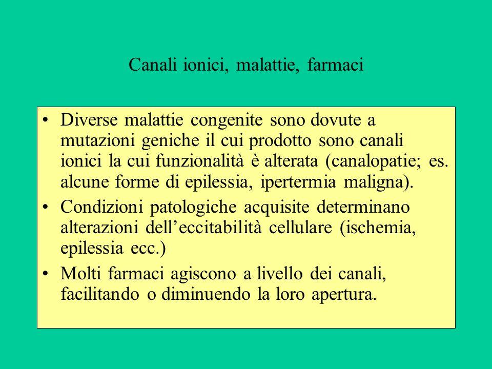 Canali ionici, malattie, farmaci Diverse malattie congenite sono dovute a mutazioni geniche il cui prodotto sono canali ionici la cui funzionalità è alterata (canalopatie; es.