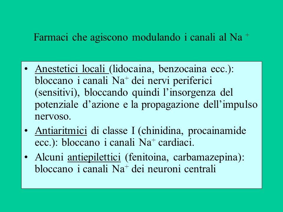 Farmaci che agiscono modulando i canali al Na + Anestetici locali (lidocaina, benzocaina ecc.): bloccano i canali Na + dei nervi periferici (sensitivi), bloccando quindi linsorgenza del potenziale dazione e la propagazione dellimpulso nervoso.