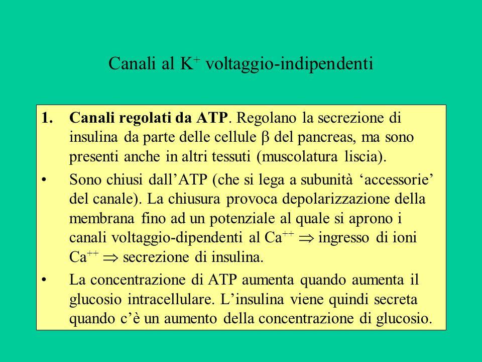 Canali al K + voltaggio-indipendenti 1.Canali regolati da ATP.