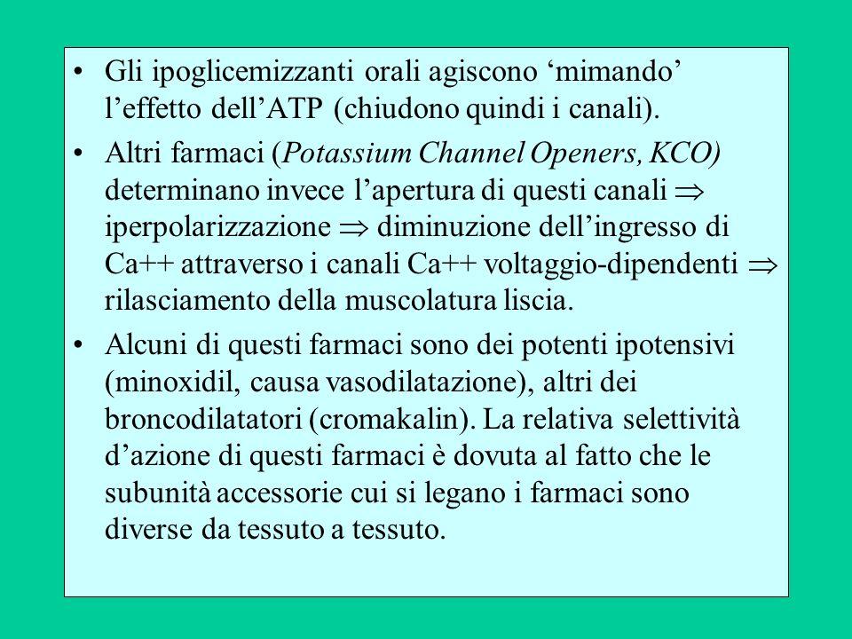 Gli ipoglicemizzanti orali agiscono mimando leffetto dellATP (chiudono quindi i canali).