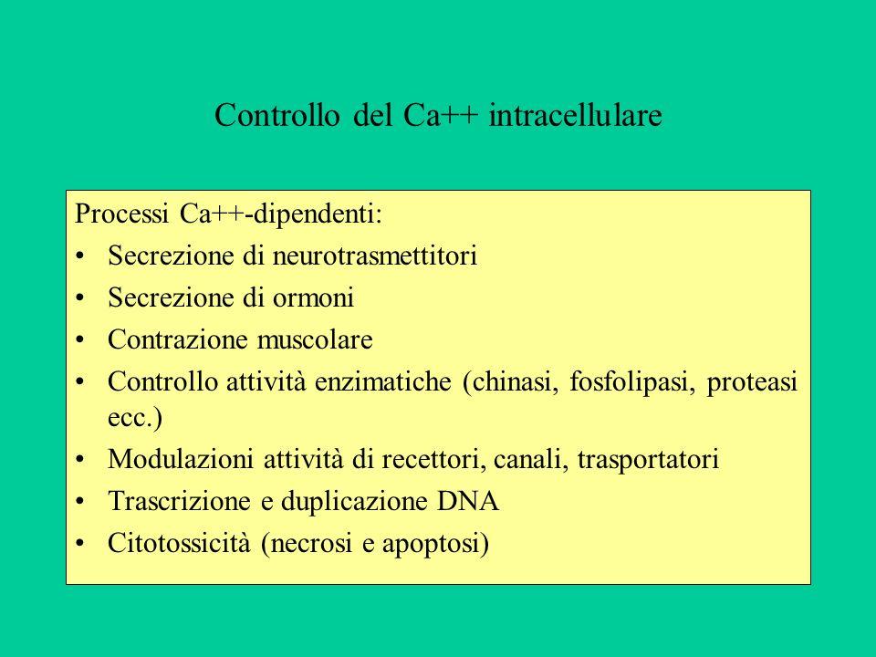Controllo del Ca++ intracellulare Processi Ca++-dipendenti: Secrezione di neurotrasmettitori Secrezione di ormoni Contrazione muscolare Controllo attività enzimatiche (chinasi, fosfolipasi, proteasi ecc.) Modulazioni attività di recettori, canali, trasportatori Trascrizione e duplicazione DNA Citotossicità (necrosi e apoptosi)