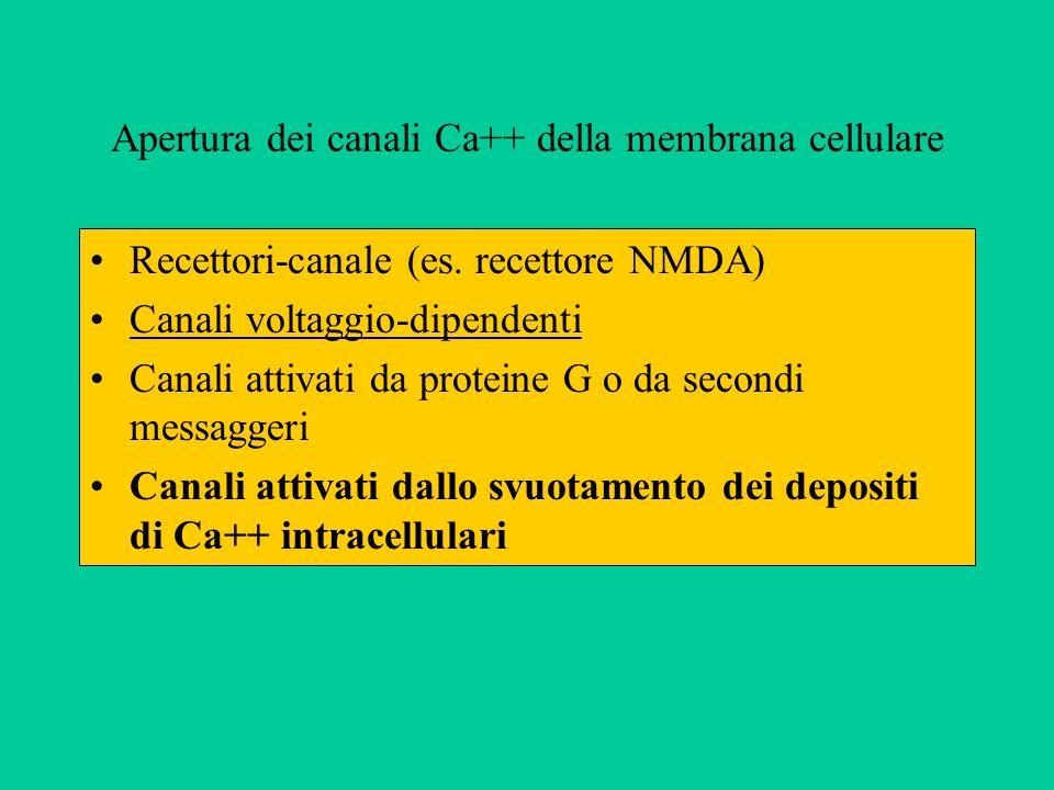 Apertura dei canali Ca++ della membrana cellulare Recettori-canale (es.