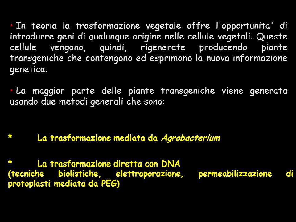 *La trasformazione mediata da Agrobacterium *La trasformazione diretta con DNA (tecniche biolistiche, elettroporazione, permeabilizzazione di protopla