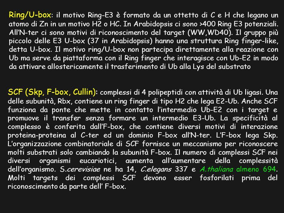 Ring/U-box : il motivo Ring-E3 è formato da un ottetto di C e H che legano un atomo di Zn in un motivo H2 o HC.