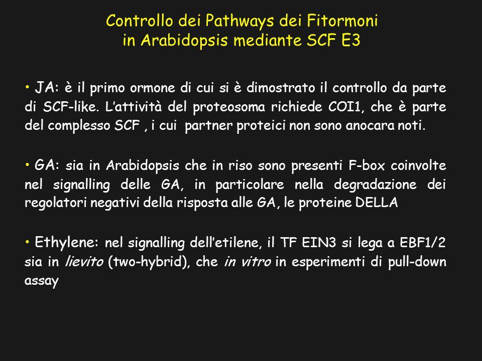 Controllo dei Pathways dei Fitormoni in Arabidopsis mediante SCF E3 JA: è il primo ormone di cui si è dimostrato il controllo da parte di SCF-like.